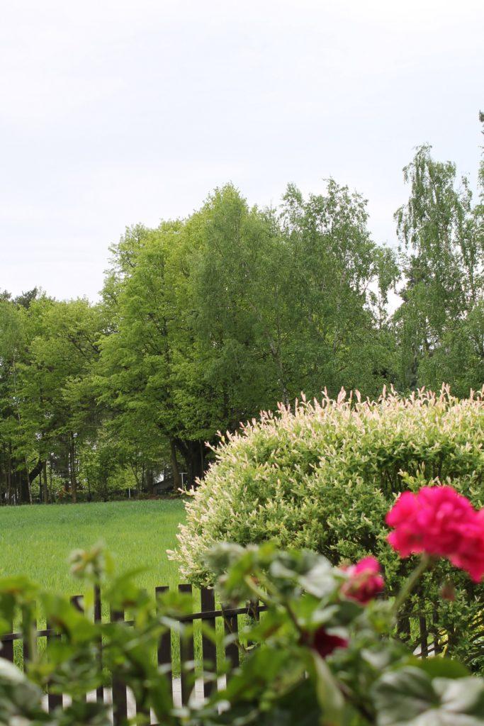 jaro nature příroda fotky photos flowers květiny sky nebe sun slunce