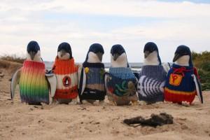 tučňáci svetr penguin sweaters Australia Austrálie Alfred Date week týden annie reprobate